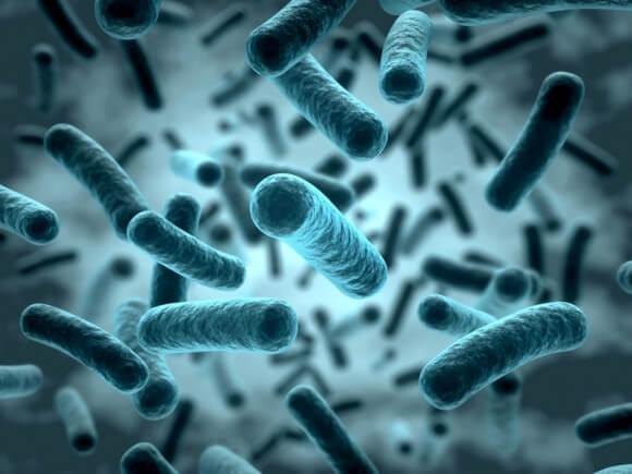 Une origine bactérienne de l'incontinence?